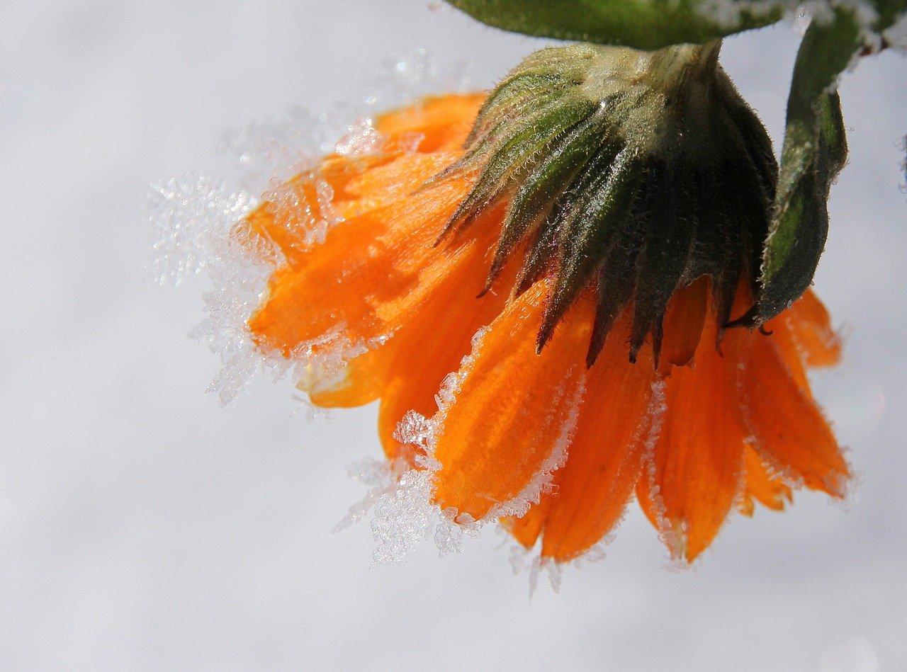 Préparation du jardin pour l'hiver : comment procéder ?